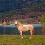 horse-doxa